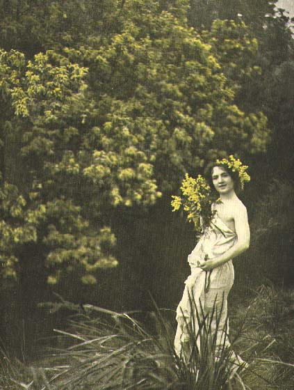 Acacia Dealbata Wattle Nymphs Art Photography From 1921