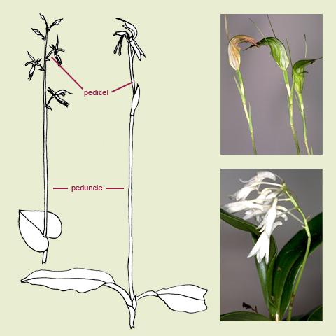 Flower Anatomy for Kids | Flower Parts Explained | Kremp Florist ...