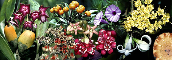Plants In The Tropical Rainforest Collage Australian Tropical Ra...