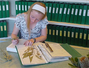 photo: using the herbarium