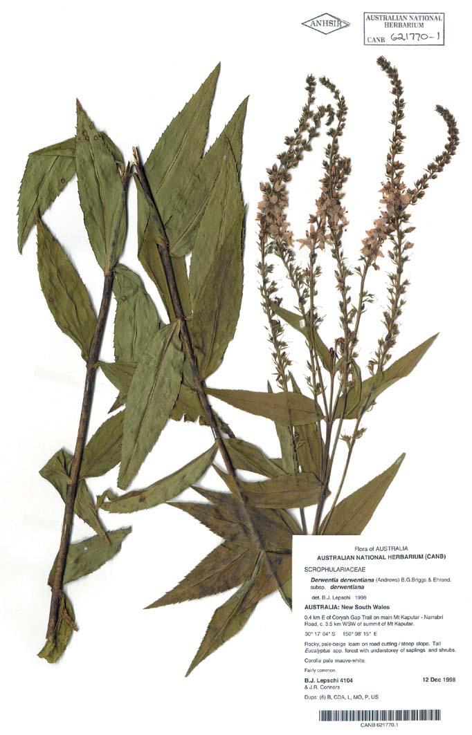 herbarium specimen explained