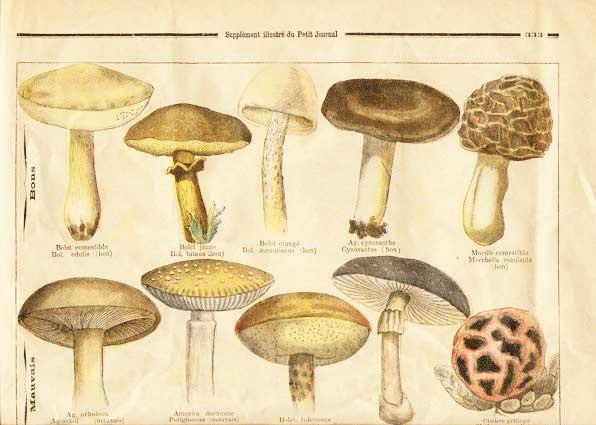 journal document around fungi