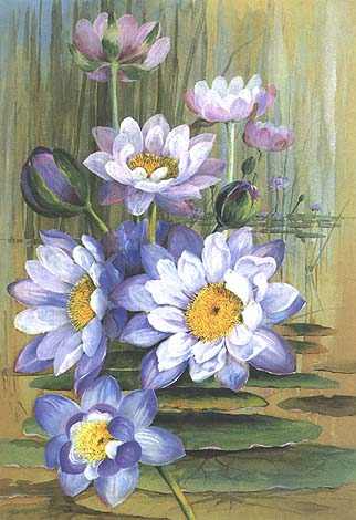 illustration: Nymphaea gigantea