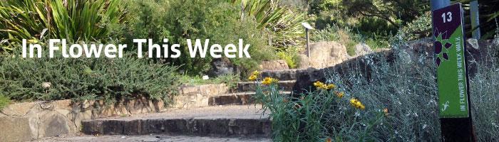 In Flower This Week Australian National Botanic Gardens
