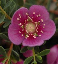 aboriginal plants uses mackay pdf