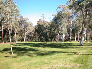 Northern Eucalypt Lawn