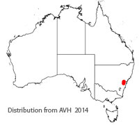 Isopogon fletcheri distribution map
