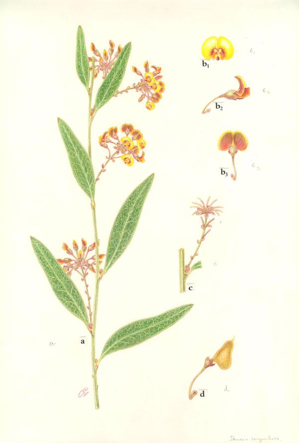 collin woolcock illustrations