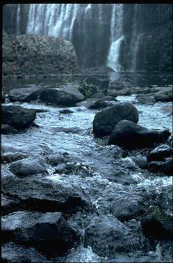 APII jpeg image of Torrenticola queenslandica  © contact APII