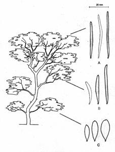 mulga mature singles Fossil features of mulga acacia aneura landscapes: possible imprinting by extinct pleistocene fauna one mature mulga if future dating.