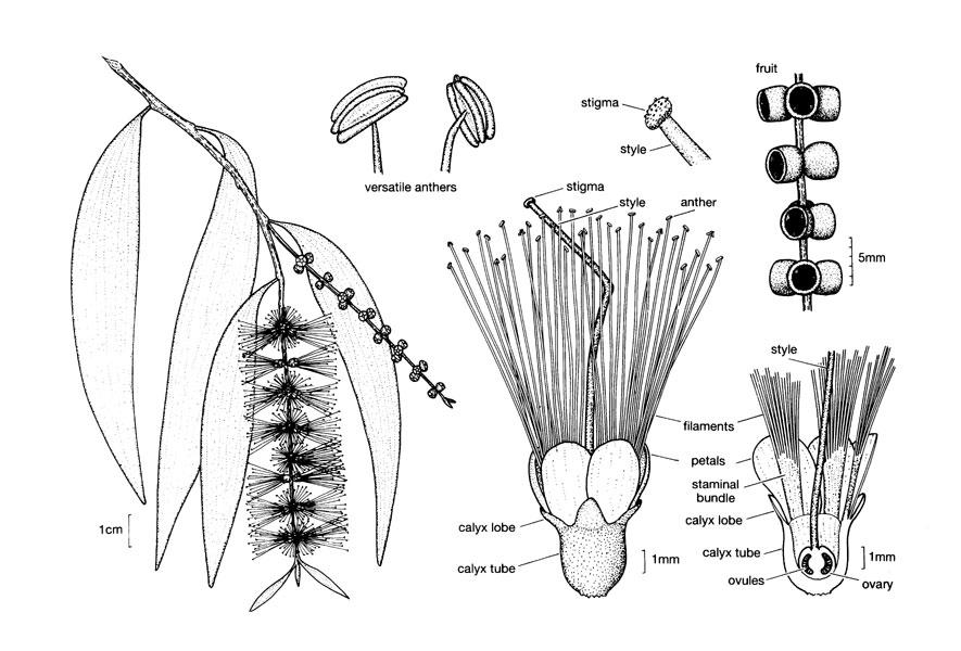 树木雕刻手绘图叶子