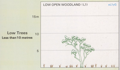 Low Open Woodland structure