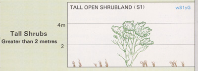 Tall Open Shrubland structure