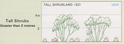 Tall Shrubland structure