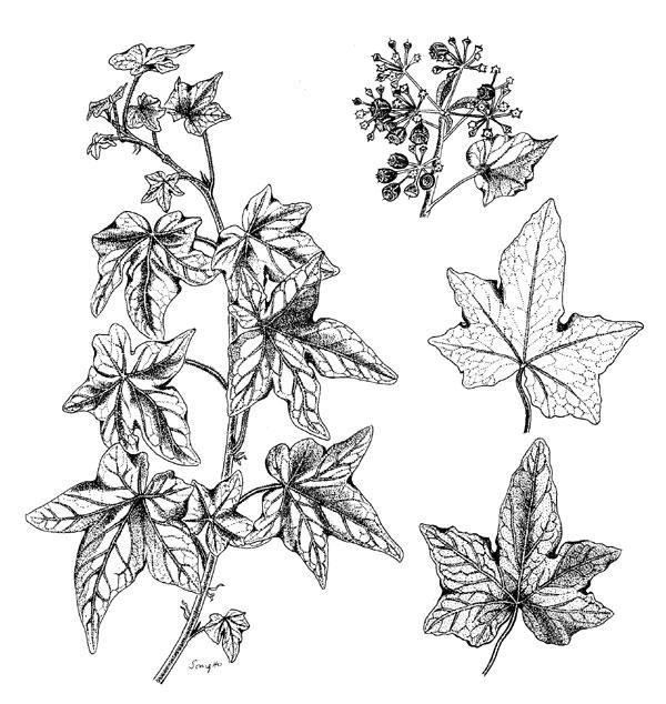 The Art Of Botanical Drawing Pdf