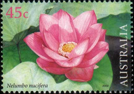 stamp: Nelumbo nucifera
