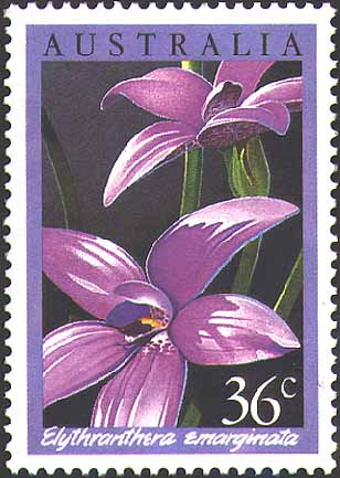 Australia Stamps - Pink Enamel Orchid